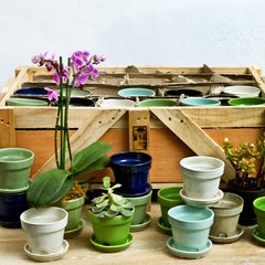 Garden Terrace Crate of 48 - Assorted Glaze - Soothing Company