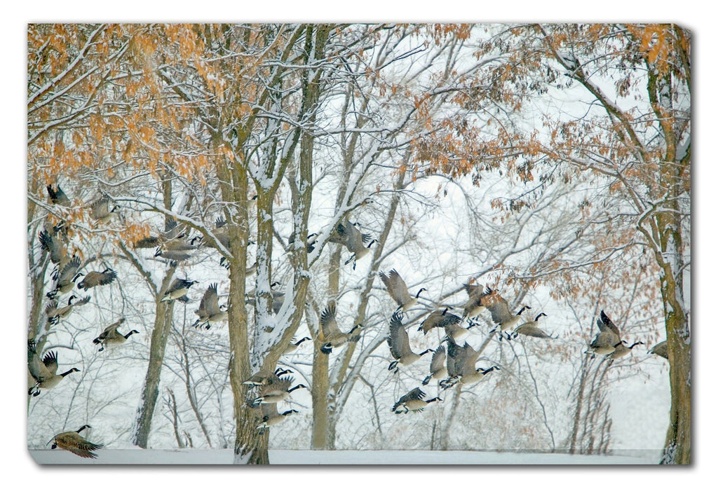 Geese in Winter Outdoor Canvas Art