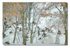 //cdn.shopify.com/s/files/1/2507/6008/products/Geese_in_Winter_Outdoor_Canvas_Art.jpg?v=1517609677