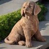 //cdn.shopify.com/s/files/1/2507/6008/products/Golden_Retriever_Puppy2.jpg?v=1527163430