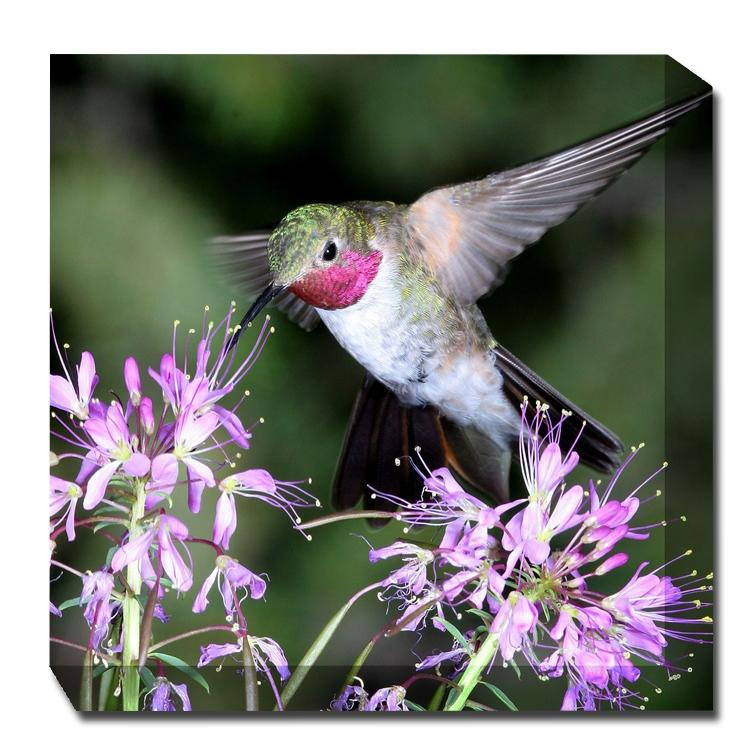 Hummingbird #1 Canvas Art - Outdoor Art Pros