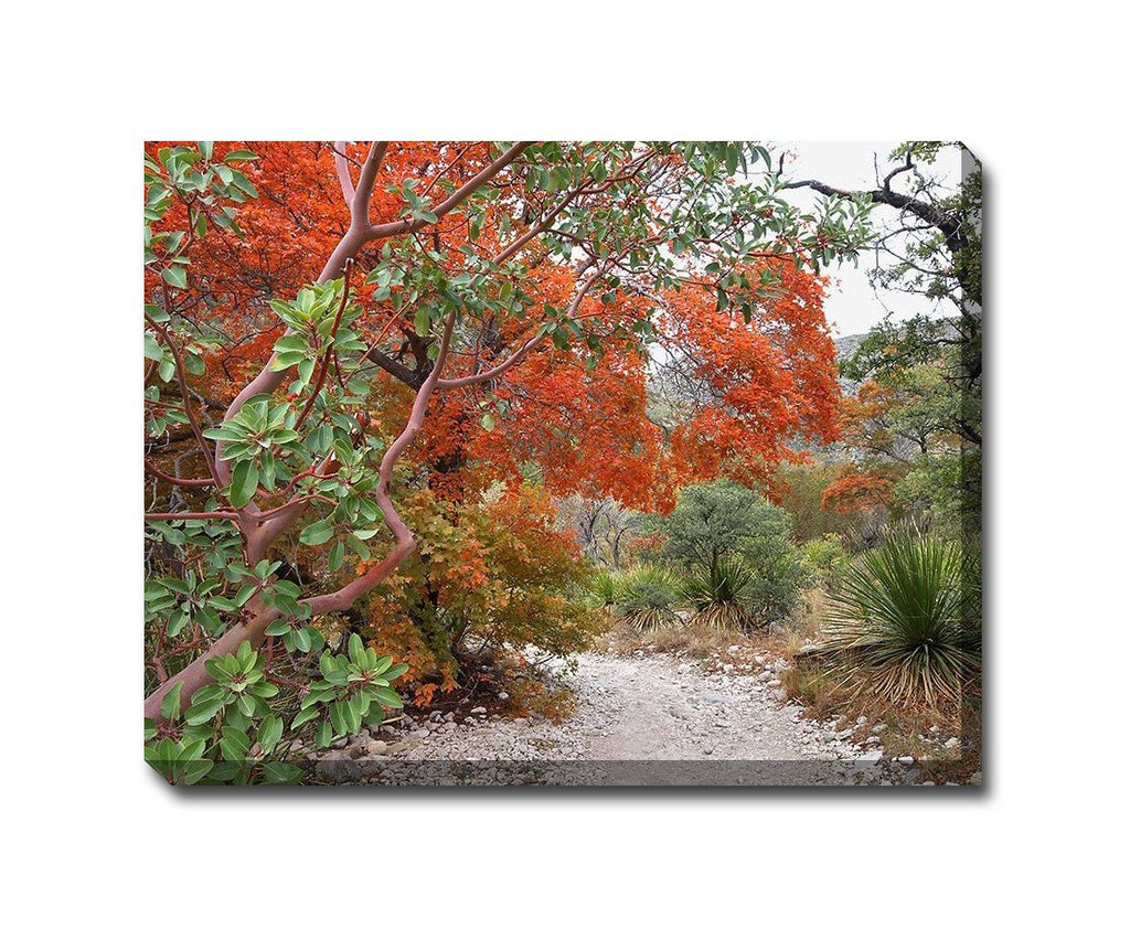 Madrone and Maple Outdoor Canvas Art