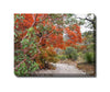 //cdn.shopify.com/s/files/1/2507/6008/products/Madrone_and_Maple_Outdoor_Canvas_Art.jpg?v=1517609947