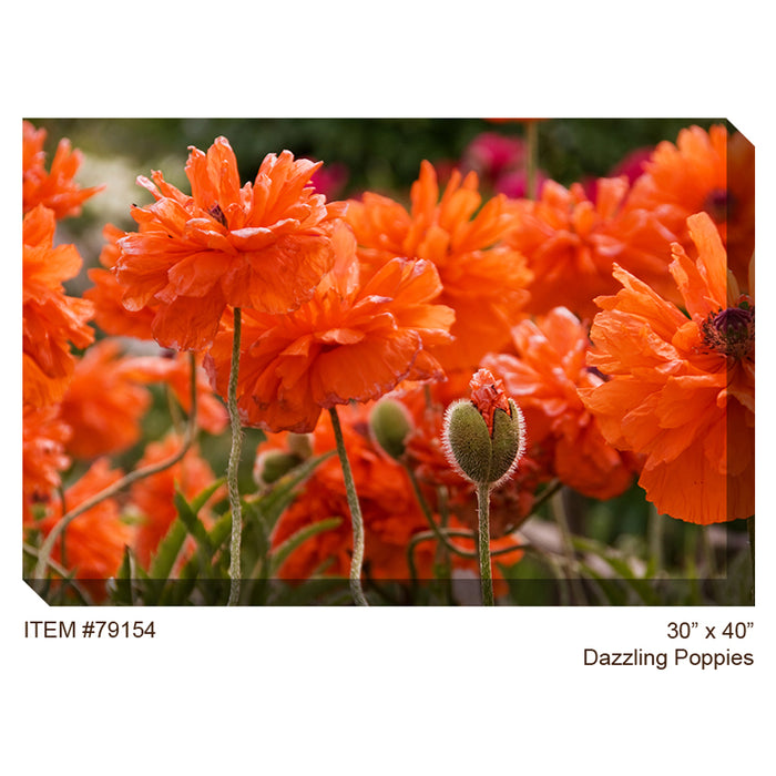 Dazzling Poppies Outdoor Canvas Art - Soothing Company