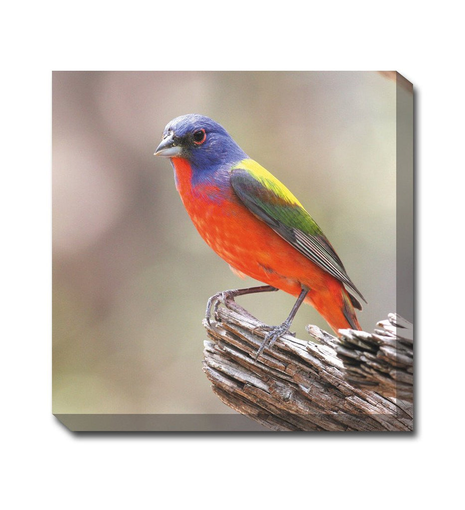 Painted Bunting Canvas Wall Art