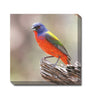 //cdn.shopify.com/s/files/1/2507/6008/products/Painted_Bunting_Canvas_Wall_Art.jpg?v=1517610134