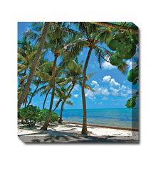 Palm 1 Canvas Wall Art