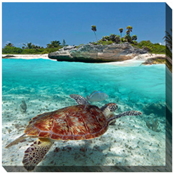Sea Turtle #4 Outdoor Canvas Art - Soothing Company