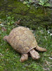 //cdn.shopify.com/s/files/1/2507/6008/products/Turtle_Cast_Stone_Garden_Statue.jpg?v=1527236483