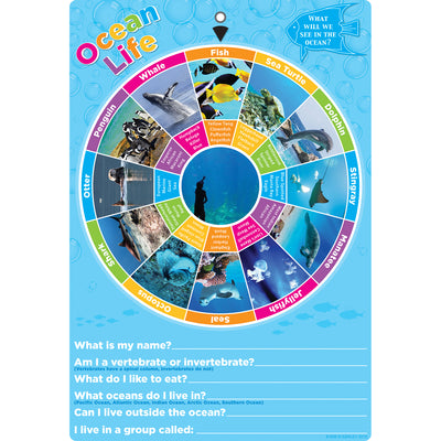 Smart Wheel Ocean Animals