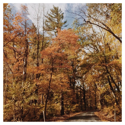 Annual Autumn Yoga & Hike at Lake Nockamixon, Quakertown, PA (includes vegetarian lunch) ✭ October 19th, 2019
