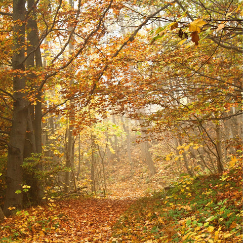 Autumn Yoga & Hike at French Creek State Park, Elverson, PA ✭ October 18th, 2020 ✭