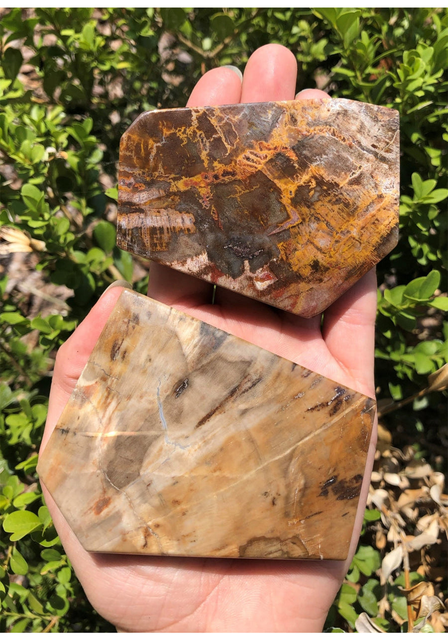 Petrified Wood Gemstone - Stone Of The Earth's Energies Natural Stones