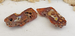 Agatized Coral Fossil Pair - Brown & White