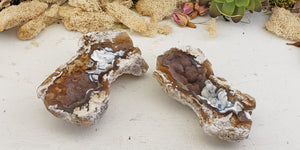 Agatized Coral Fossil Pair - Brown & Blue