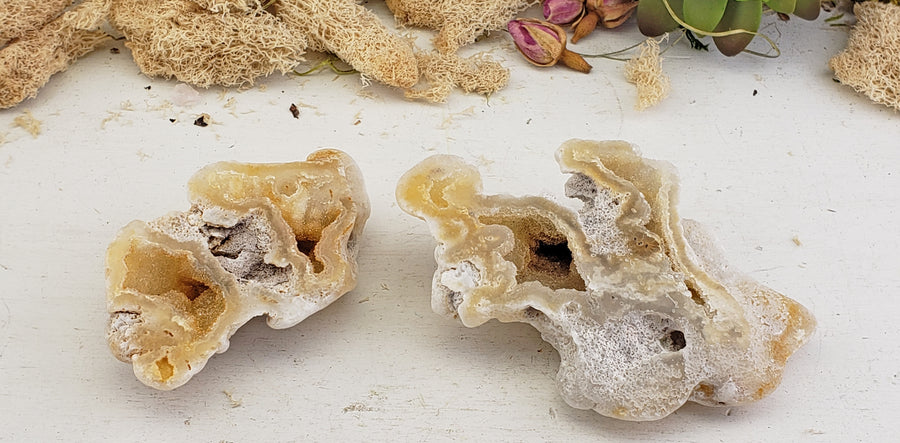 Agatized Coral Fossil Pair - Ivory