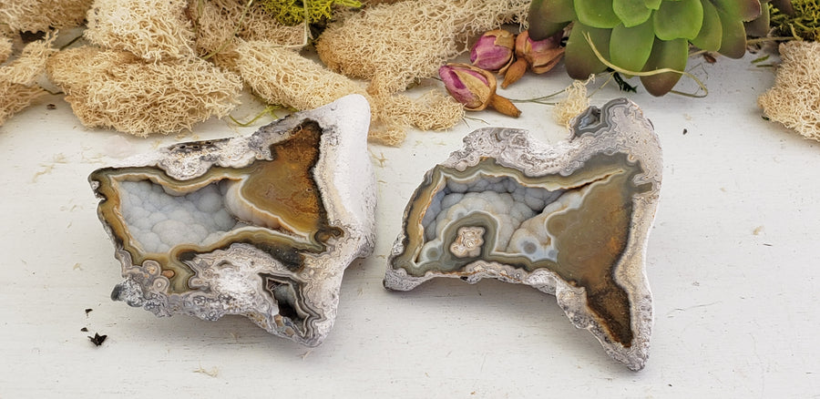 Agatized Coral Fossil Pair - Silver & Brown