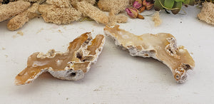 Agatized Coral Fossil Pair - Brown & Ivory