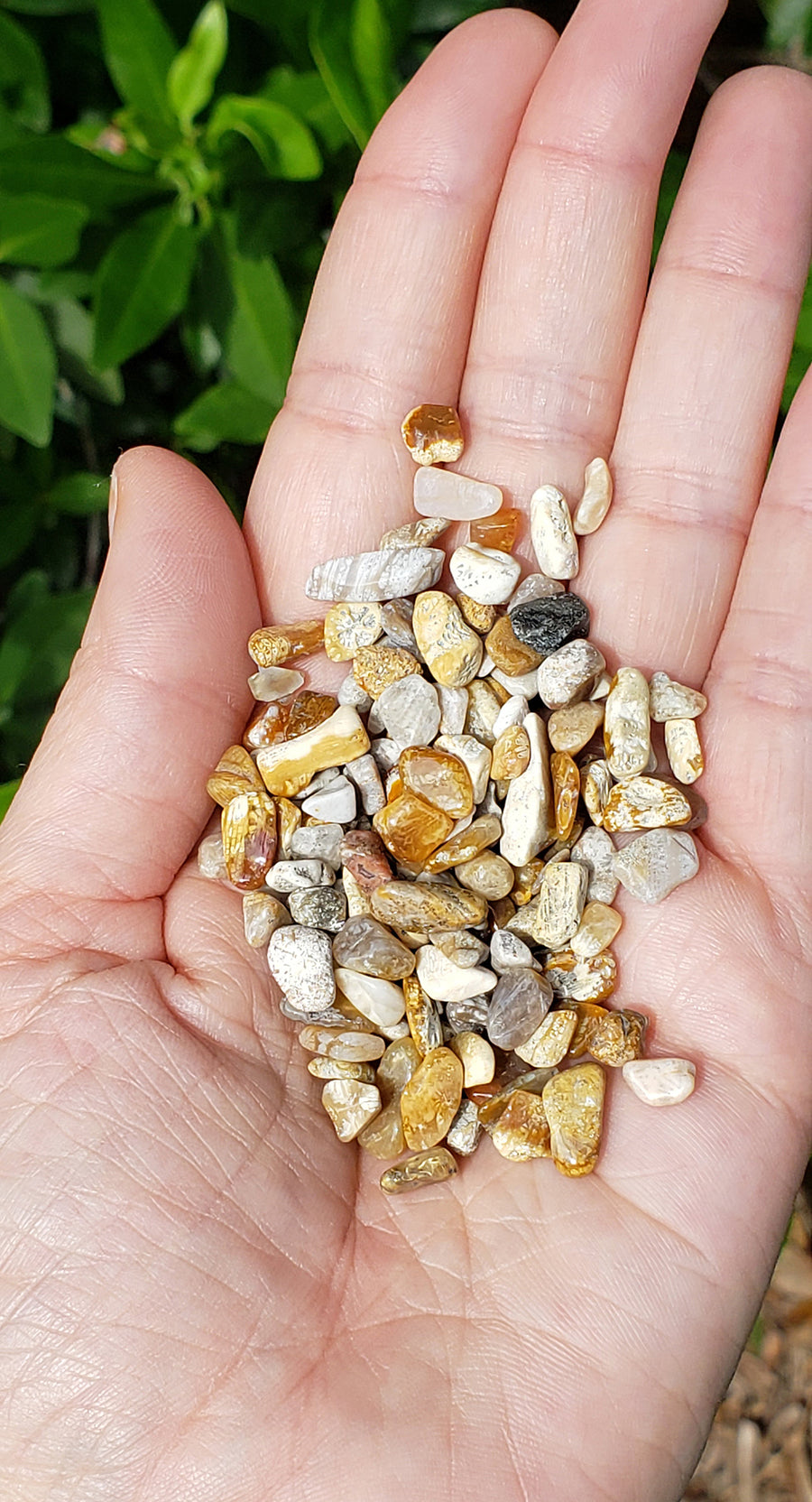 Fossil Coral Gemstone Chips - 1 Ounce Bag
