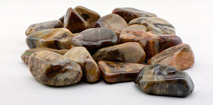 Petrified Wood Tumbled Polished Gemstone
