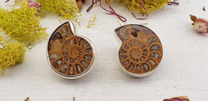 Ammonite Shell Sterling Silver Earrings