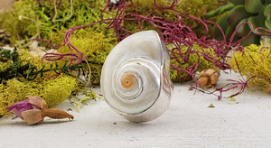 Pearly Shell Gemstone Sterling Silver Ring