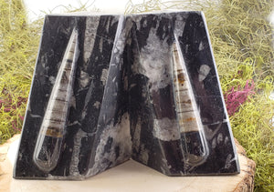 Orthoceras Fossil Gemstone Bookends Carvings