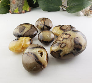 Septarian Natural Palm Stones Gemstone Carvings