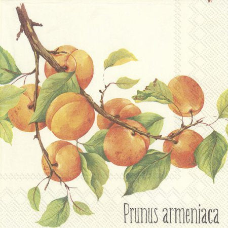 Prunus Armeniaca - Lunch Napkins