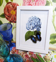 Botanical Napeocles Jucunda - Great Blue Hookwing with Hydrangea