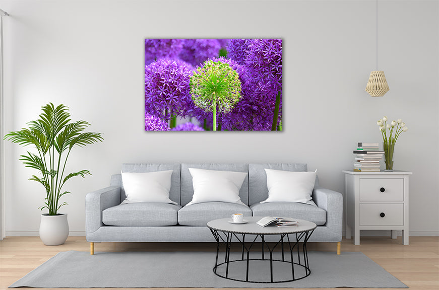 Add a splash of colour to you room with our fabulous Aluminium Prints.
