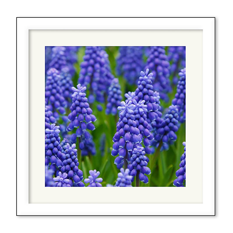Square Perfect Gloss - Medium Premium Framed Print example