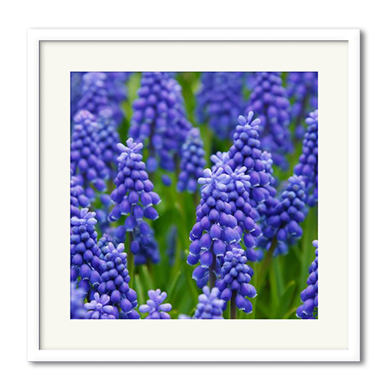 Square Perfect Gloss - Slim Premium Framed Print example