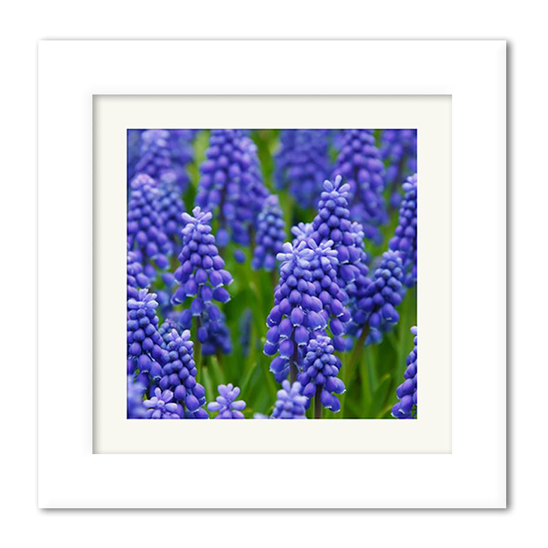 Square Perfect Gloss - Wide Premium Framed Print example