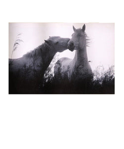 GIFT CRAFT HORSES CANVAS PRINT- STYLE #080949