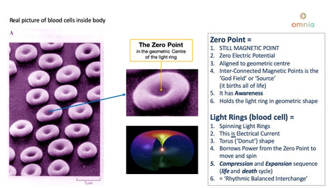 Blood cells are light rings which are spinning round a magnetic Zero Point