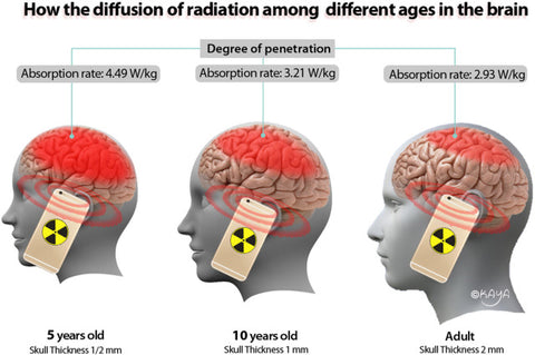 Specific Absorption Rate of EMF in adults and children
