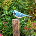 Wooden Blue Tit