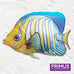 Fish Wall Art - Regal Angelfish