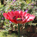 49cm Small Metal Poppy