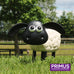 Timmy the Sheep
