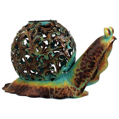 Ornate Solar Snail