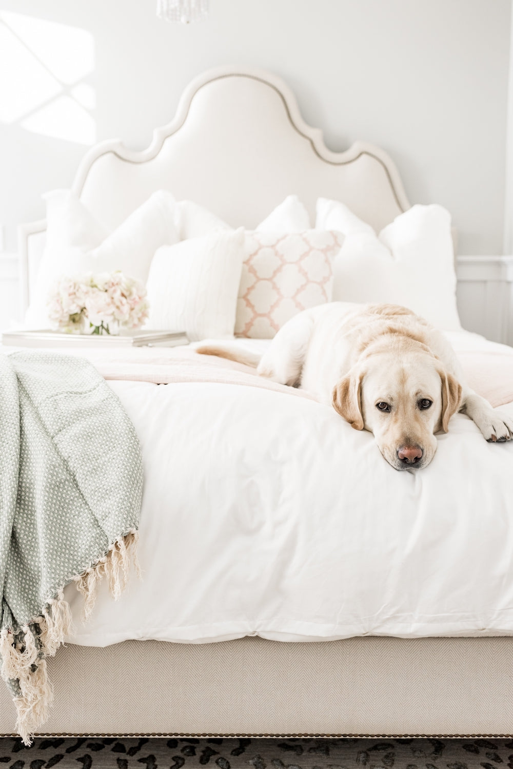 Rachel Parcell Dog on Allswell Bed
