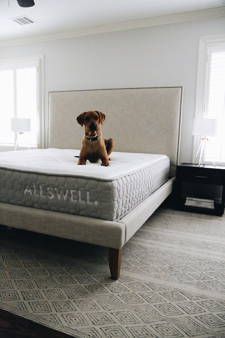 dog on allswell mattress