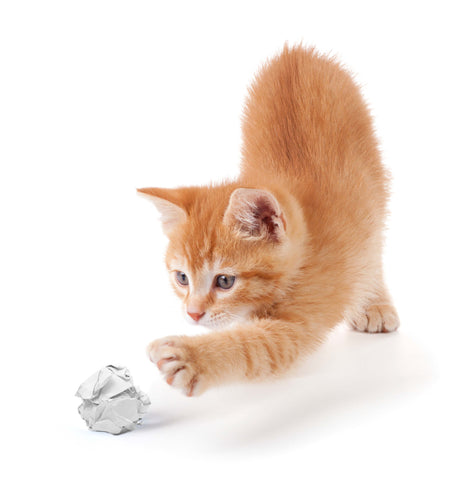 A ginger kitten playing with DIY paper cat balls