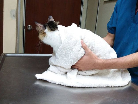 Mr.Miyagi hospitalized due to toxic of clay sand and silica crystal based cat litter