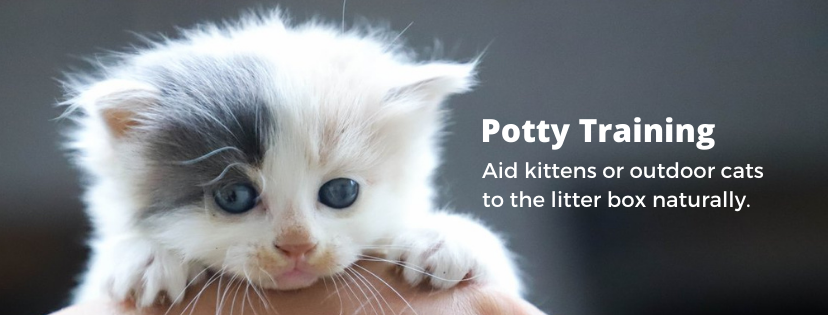 Pottycats litter for potty training kittens and outdoor cats to litter box