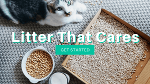 Pottycats the best natural tofu cat litter in Malaysia that cares for your cats health