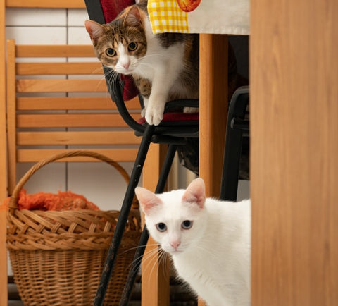 Do male or female cats make better pets?