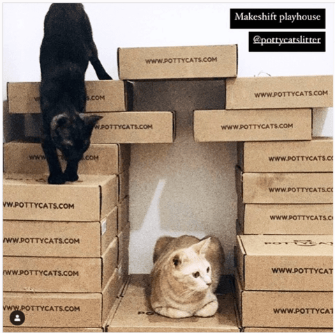 Two adult indoor cats playing in cat house made from Pottycats litter boxes